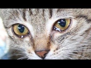 Брошенный котёнок  (DJ МАНУК)