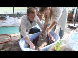 Купание обезьянок в краснодарском зоопарке Сафари-парк