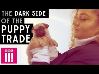 The Dark Side of Britain's Insta Puppy Trade