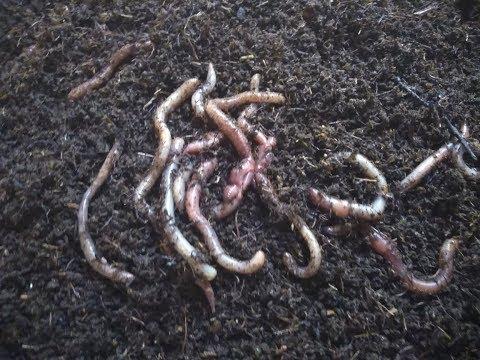 Система содержания червя Советы начинающим вермерам