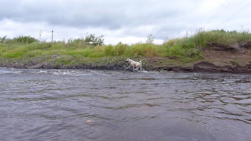 Муруся Бесстрашная в бурной реке