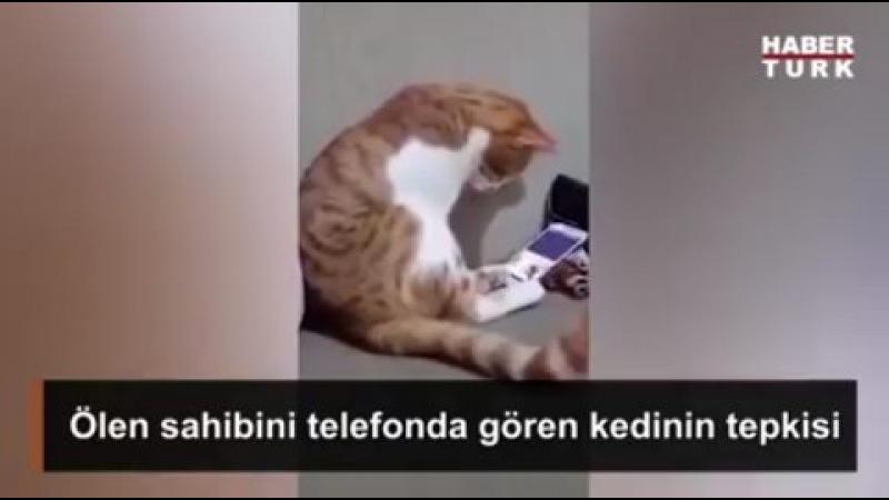 """Huzur İslamda on Instagram """"@huzurislamda ✔ Hayvanlardan öğrenecek çok şeyimiz var, insanlık gibi.. ) Mesud @mesudcetinkaya ✔"""""""