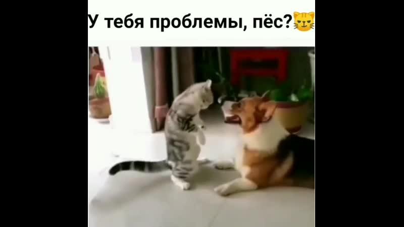 Опасная стойка собакен собакин собачка собака кот кошка котэ котик киса коты животное животные смешныевидео смешн
