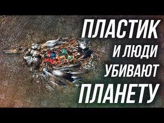 Мертвые птицы, которые наелись пластиком l Берег Черного моря, Россия 2018