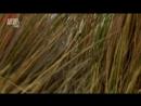 В дебрях Африки (2010) (3 серии)