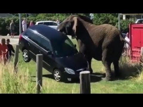 Вторжение в дикую природу поведение животных