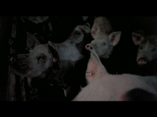Pigs 1972 / daddy's deadly darling / horror farm / the 13th pig / свиньи hd 720 eng+(eng sub)