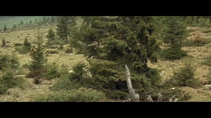 Medved.1988.XviD.DVDRip-ExKinoRay