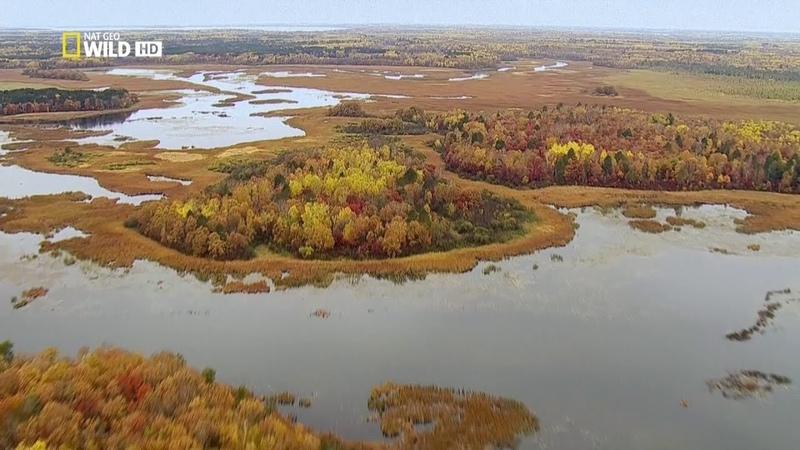 Величественная Миссисипи Nat Geo Wild На границе с дикой природой 1080р