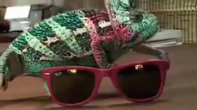Super Chamelion Ray Ban Commercial
