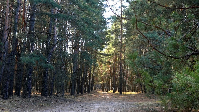 Волшебство рядом Сосновый лес ранняя весна март лесные сюжеты природа красивая музыка Релакс