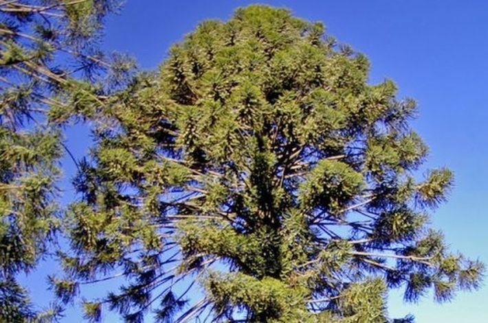 Опасные для жизни деревья, изображение №5