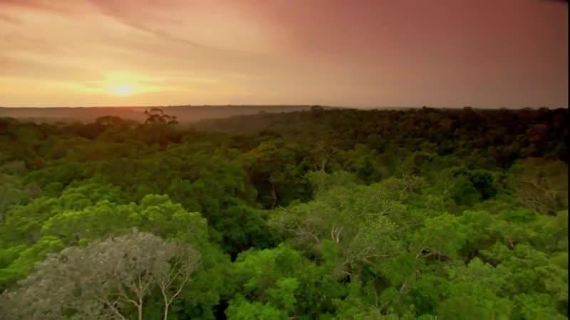 В дебрях Латинской Америки-Амазонка