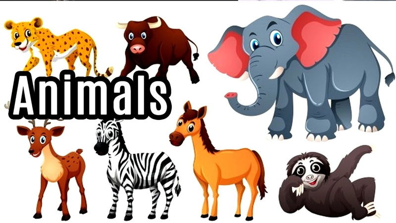 Learn Animal and their habitant