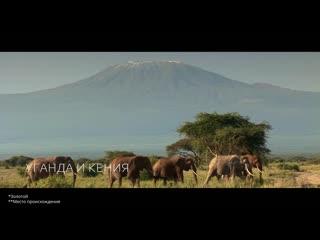 Nescafe Gold Origins Kenya