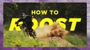 How to Roost with Dylan Forbes