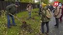 Высадками деревьев и кустов активно занялись в Череповце