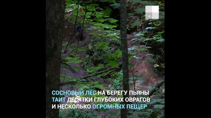 Гуляем по Ичалковскому бору