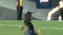 Саманта Валле (Samantha Valle) с собакой и их фризби фристайл в перерыве матча