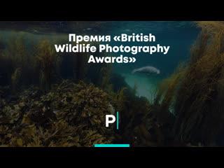 Премия «british wildlife photography awards»
