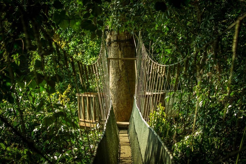 Подвесные мосты на Борнео, изображение №2
