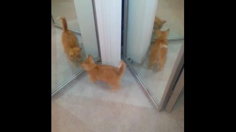 Озадаченные кошки