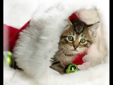 Дискотека аверия новогодняя и фото новый год от декабря 2012