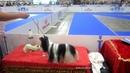 Международные выставки собак всех пород Золотая пектораль Злато скифов София Киевская Киев 23 25