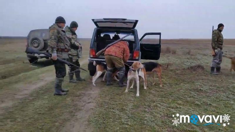 Охота с гончими на лису в северном Крыму fox hunting with dogs ENG SUB