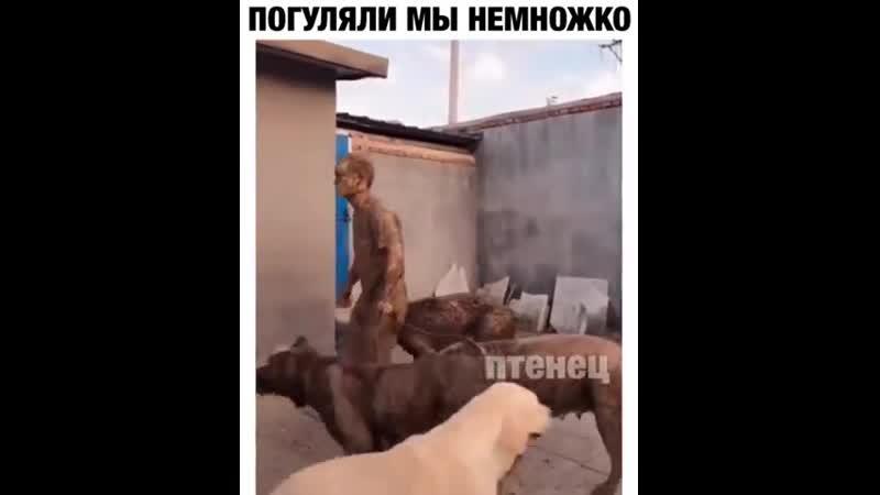 Когда ты собачник... 😅😂🤣