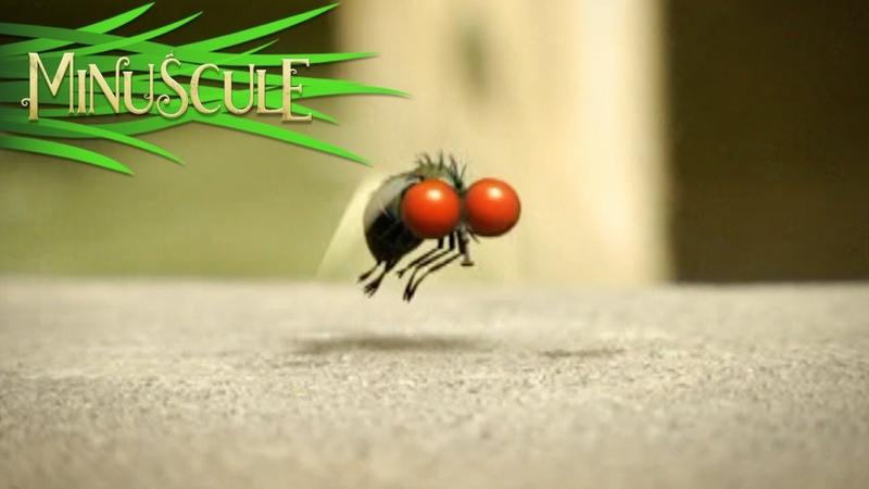 Minuscule - mouche folleMad Fly (Season 1)