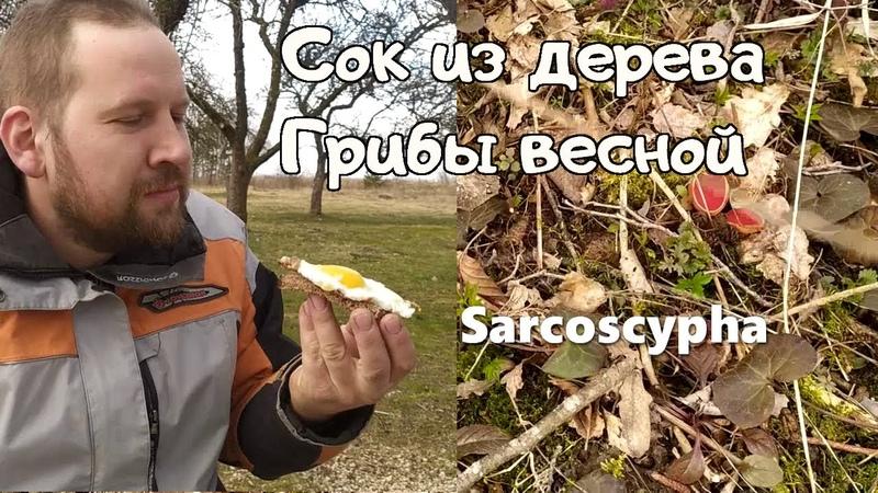 Весенние грибы с березовым соком