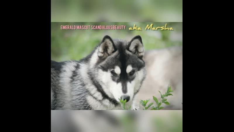 EMERALD MASCOT ⭐ Scandalous Beauty 💕