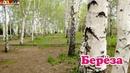Логопедическое видео - Развивающее видео. Логопедия. Буква Р. Часть 2