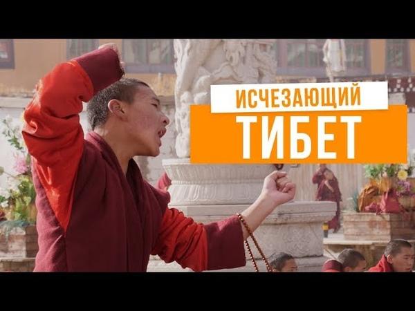 Я познакомился с живым Буддой! Как люди живут в тибетских монастырях. Тибет.