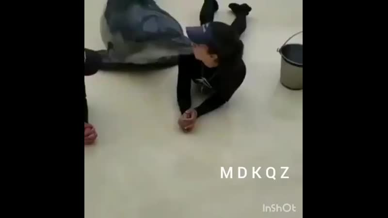 дельфины и девочки