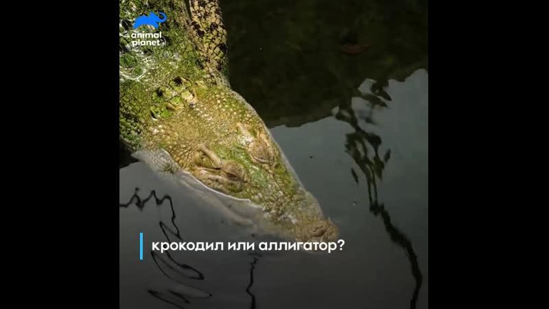 Animal Planet Вопрос-ответ