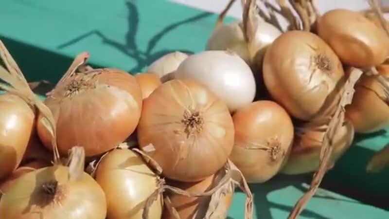 Еда живая и мёртвая Факты и мифы о луке семечках и вегетарианстве