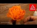 Cách cắt tỉa hoa quả, tỉa hoa cẩm chướng từ cà rốt. ( ghép cánh)