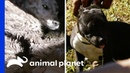 Some Of The Toughest Rescues Pit Bulls Parolees Compilation