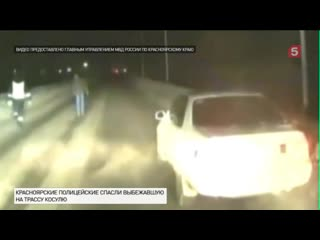 Полицейские спасли выбежавшую натрассу