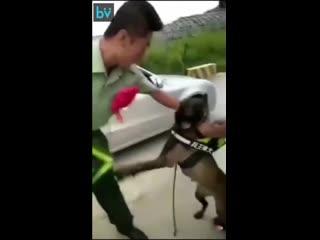 Служебный пес не хочет, чтобы хозяин уходил на пенсию