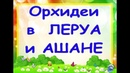 ОРХИДЕИ в ЛЕРУА и АШАНЕ ТЦ Космопорт Самара 30 08 19 ПРИВЕТ Ринату Фахрутдинову