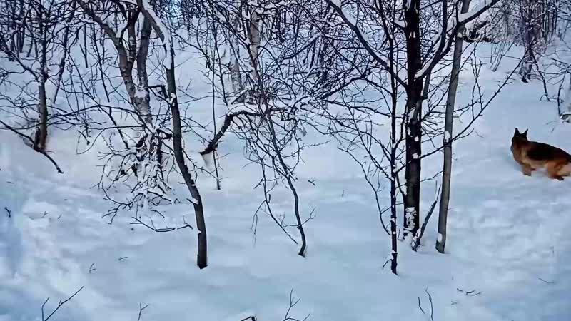 Здесь в низине ещё снег лежит на ветках деревьев смотреть онлайн без регистрации