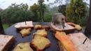 A morning at our bird feeder in Lago Arenal Costa Rica