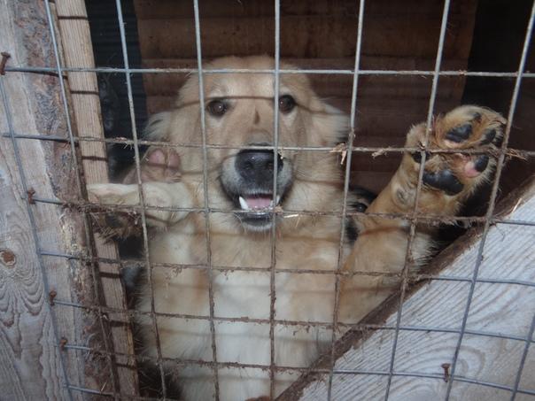 фото собак из приюта в рязани