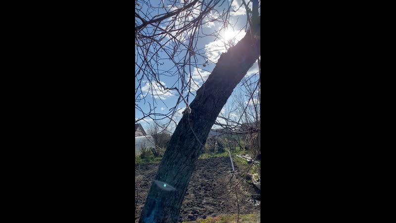 Браширование дерева