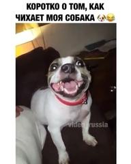 """animals_video on Instagram: """"Такой Милаш 😍😍😍Подписывайтесь на наш второй проект @8_vkusnota @8_vkusnota @8_vkusnota"""""""