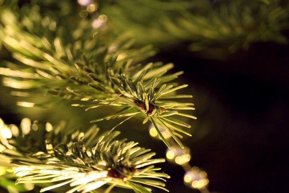 «Мосприрода» покажет хвойные растения дендросада на природной территории «Кузьминки-Люблино» онлайн