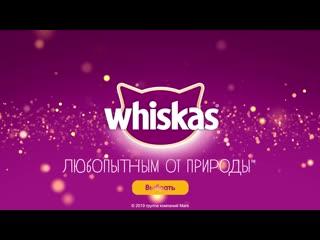 Whiskas new year